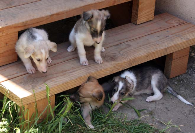 Pups on Steps